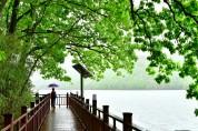 [포토] 여름비 내리는 장성호 수변길