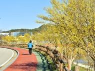 [포토] 산수유… 장성 황룡강의 봄을 노랗게 물들이다